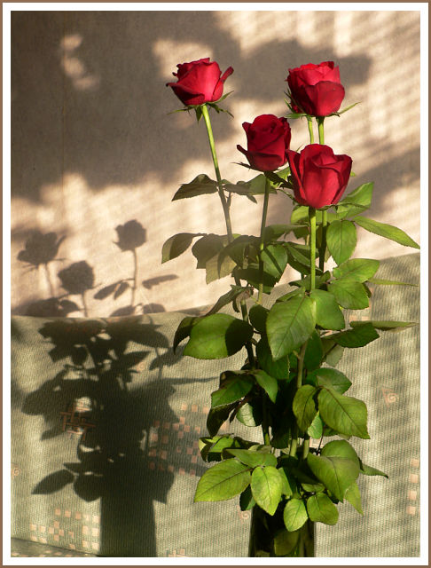 Roses in the afternoon