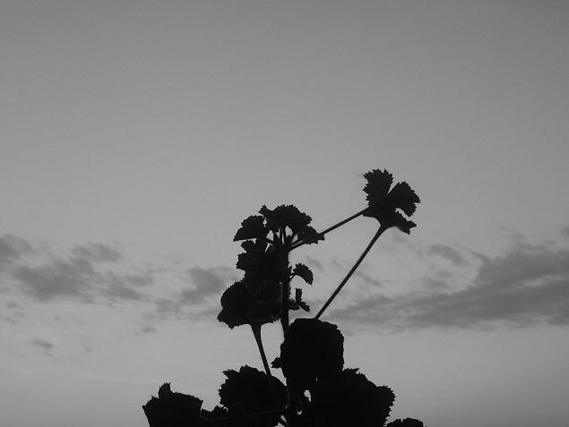 A Flower's Silhouette