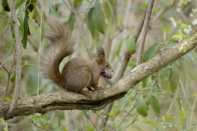 squirrel-ii-640.jpg